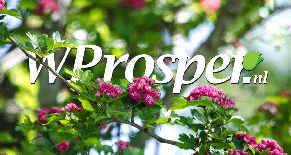 Wprosper-what-did-you-read-last-summer